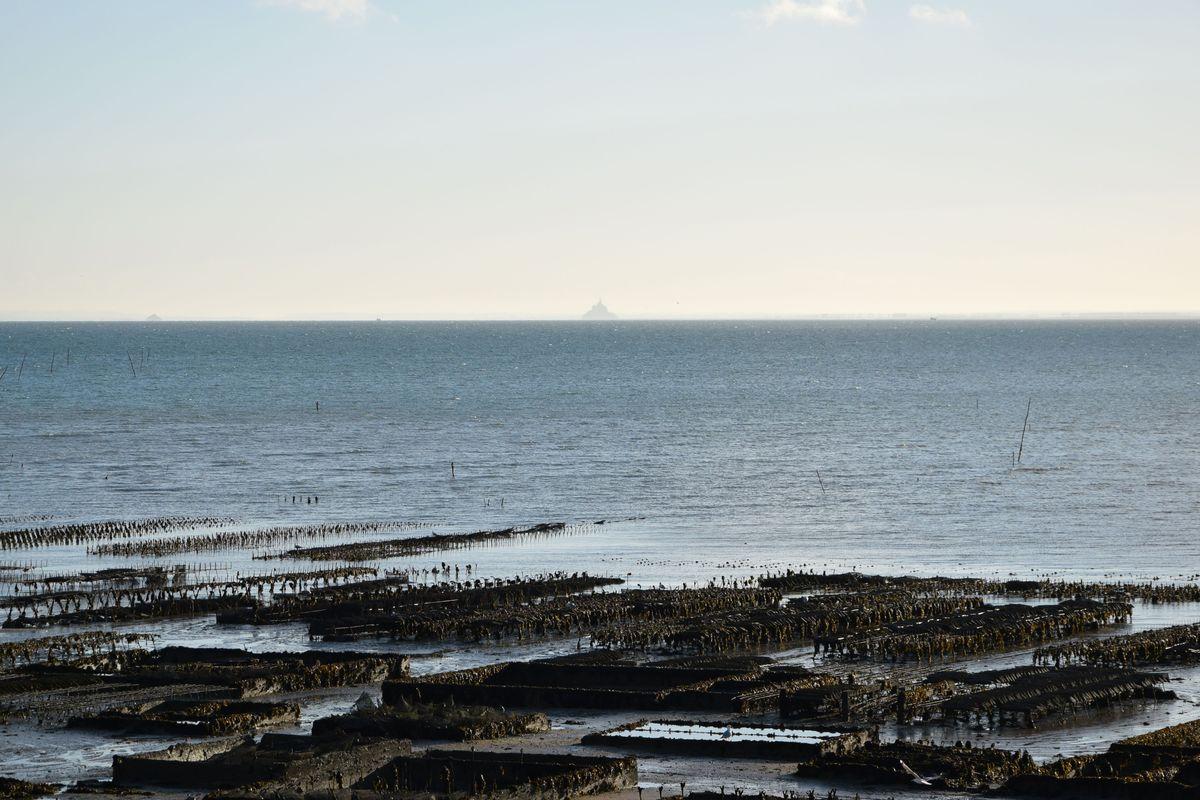 TECH Bretagne accompagne les entreprises de conchyliculture et les fermes marines